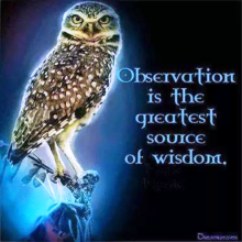 2014-05-observation-is-the-greatest-source-of-wisdom